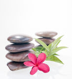 Red plumeria flower, bamboo leaves and river stones Royalty Free Stock Image