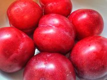 Red Plums. A bowl of rinsed red plums Royalty Free Stock Photo