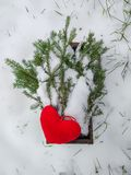 Red plush heart and fir tree branches in wooden box in winter garden. stock images