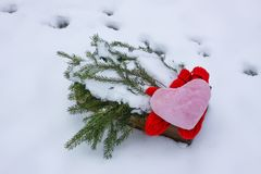 Red plush heart and fir tree branches in wooden box in winter garden. royalty free stock photo