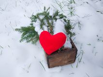 Red plush heart and fir tree branches in wooden box in winter garden. Red plush heart and green fir tree branches in wooden box in winter garden royalty free stock photography