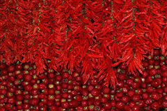 Red pods of hot pepper and exotic Passion Fruit Stock Photography