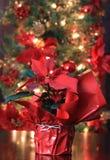 Red Poinsettia Stock Photo