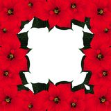 Red Poinsettia Border isolated on White Background. Vector Illustration. Red Poinsettia Border isolated on White Background. Vector Illustration Royalty Free Stock Images
