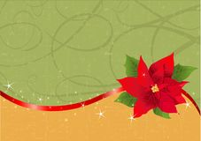 Red poinsettia Christmas background Royalty Free Stock Images