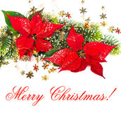Red Poinsettia. Christmas Flower. Card Concept Royalty Free Stock Photography