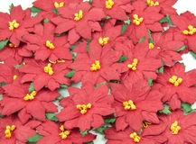 Red Poinsettia. Christmas Flower background Royalty Free Stock Photography