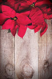 Red poinsettia Christmas flower on wooden background. Royalty Free Stock Image