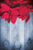 Red poinsettia Christmas flower on wooden background. Royalty Free Stock Images