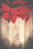 Red poinsettia Christmas flower on wooden background. Stock Photos