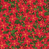Red poinsettia.Christmas seamless pattern, Stock Image