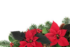 Red Poinsettia Flower Border Stock Photography