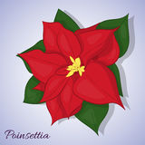 Red poinsettia flower. Christmas Star. Simple cartoon style. Vector illustration. Red poinsettia flower on blue background. Christmas Star. Simple cartoon style Stock Images