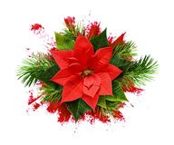 Red poinsettia flower and Christmas tree branches on paint brush. Strokes isolated on white background. Top view. flt lay stock photos