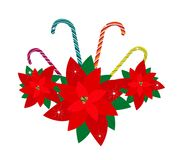 Red Poinsettia Flowers with Lovely Candy Canes Royalty Free Stock Image