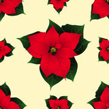 Red Poinsettia on Ivory Beige Background. Vector Illustration Stock Photography