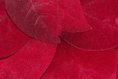 Red Poinsettia leaves up close. stock photography