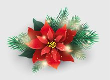 Red Poinsettia plant with Christmas tree branches. Red isolated Poinsettia flower with Christmas tree branches on white background Stock Photography