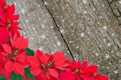 Red poinsettia and snow Stock Photos