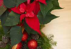 Red poinsettia - a symbol of Christmas holiday Royalty Free Stock Images