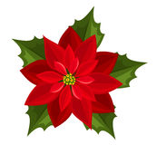 Red poinsettia. Vector illustration. Royalty Free Stock Image