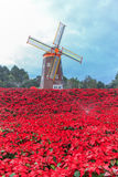 Red Poinsettia and Wind turbine Royalty Free Stock Image
