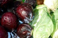 Red, pointed and round cabbage Royalty Free Stock Images