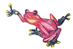 Red poison dart frog Royalty Free Stock Photos