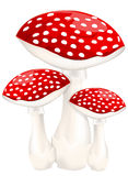 Red poison mushrooms Stock Photography