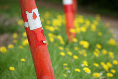 Red pole. Closeup picture of dandelion and work area with red pole royalty free stock images