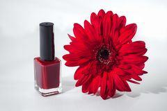 Red varnish flower royalty free stock photography
