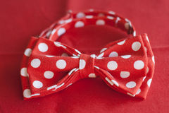 Red polka dot tie butterfly rests on red in background Stock Photos