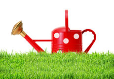 Red polka dot watering can on green grass isolated on white. Background Royalty Free Stock Photos