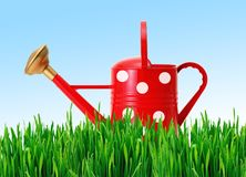Red polka dot watering can on green grass over blue sky Stock Photos