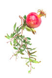 Red pomegranate. On the white isolated background with place for your message royalty free stock photography