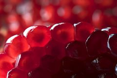 Red Pomegranate seeds. Stock Image