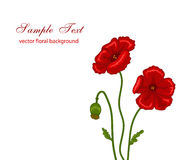 Red poppie. Vector illustration of red poppies on white background Royalty Free Stock Photos