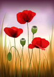 Red poppies – vintage background Stock Photography
