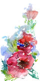 Red Poppies. Summer. Watercolor on white background vector illustration