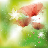 Red poppies. Illustration, contain gradient mesh, eps-10 Royalty Free Stock Photo