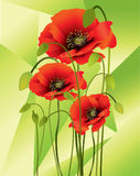 Red poppies. Abstract red poppies with buds on green abstract background Stock Photography