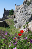 Red poppies and ancient castle(Marvao,Portugal) Stock Image