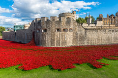 Red poppies art installation at Tower of London, UK Stock Images