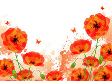 Red Poppies Back Royalty Free Stock Images