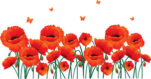 Red poppies back Stock Photography