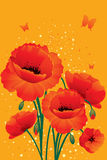 Red poppies back. Vector illustration Stock Image