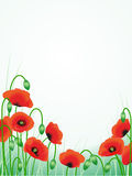 Red poppies background Royalty Free Stock Photo