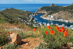 Red poppies on a background of Black Sea in Balaclava Bay. Royalty Free Stock Photography