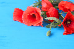 Red poppies on a background. Red poppies on a blue background Stock Photography