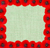 Red poppies bordered background. Red poppies bordered squere background Stock Images